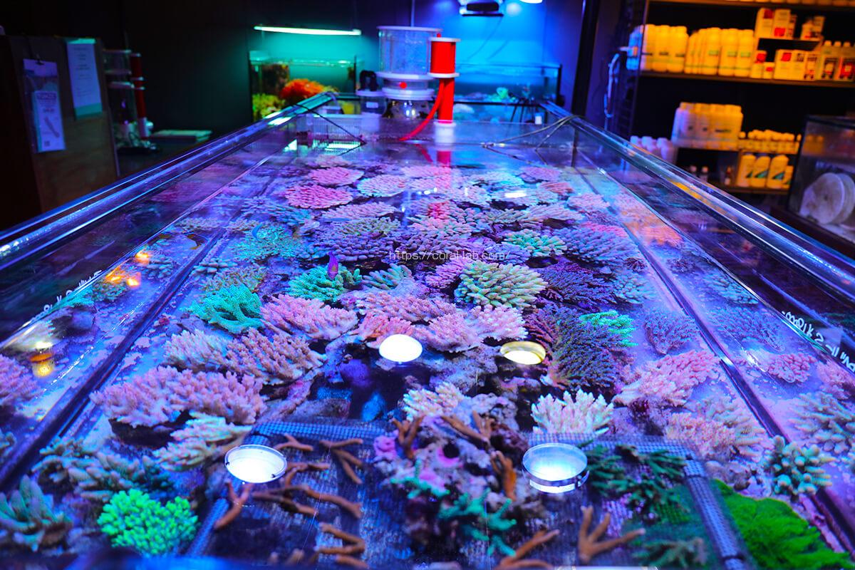 海水魚、珊瑚、イソギンチャク