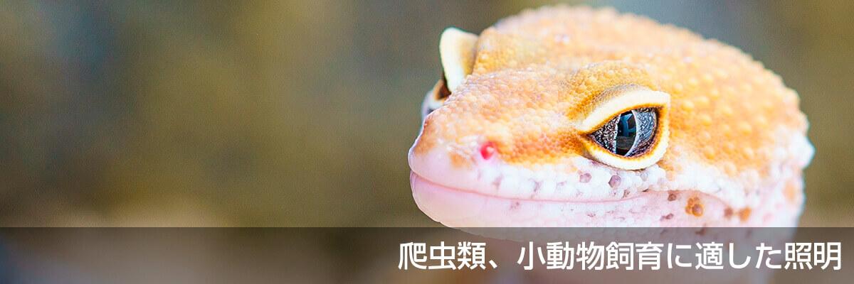 爬虫類、小動物飼育に適した照明