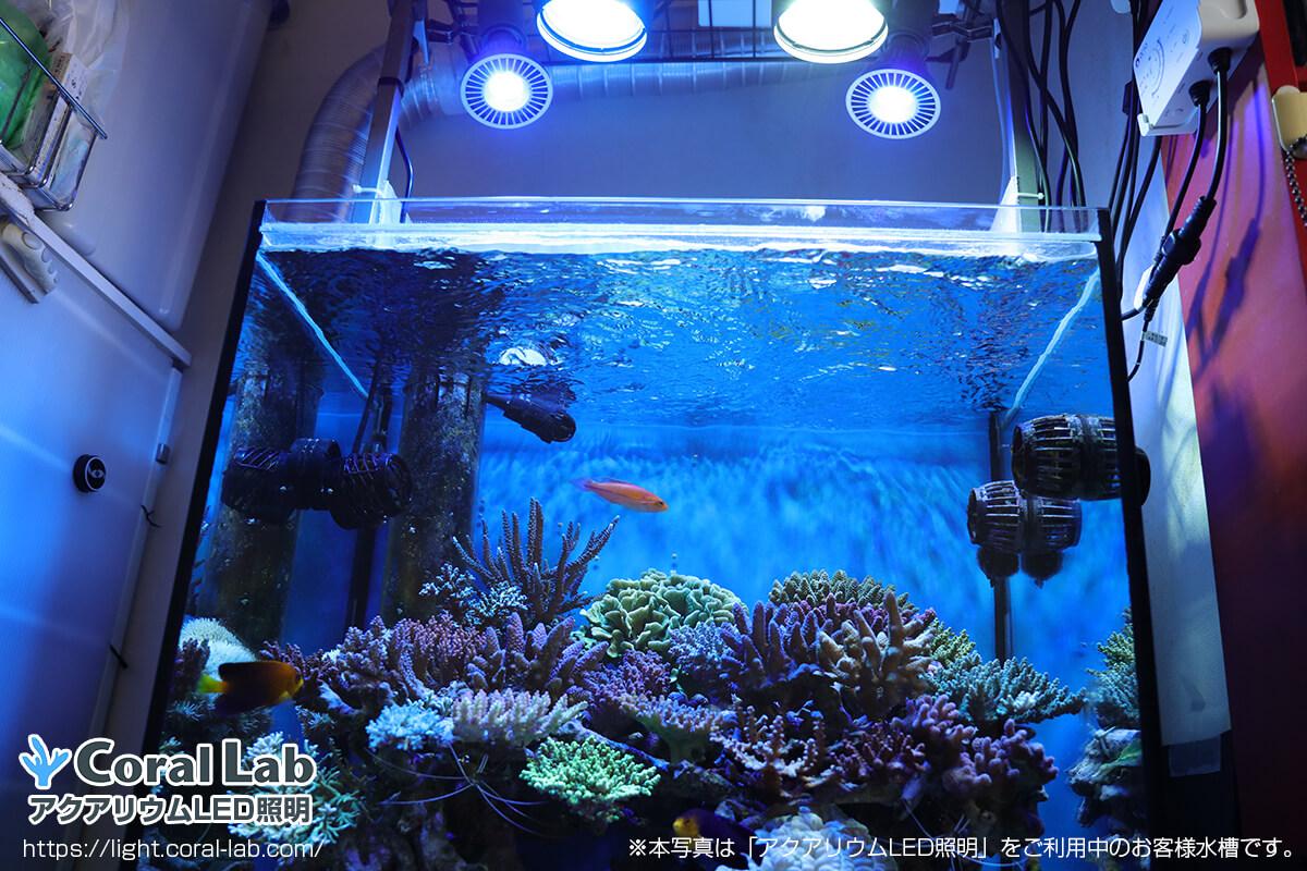 星野様のアクアリウムLED照明を利用したオーバーフロー水槽の全景