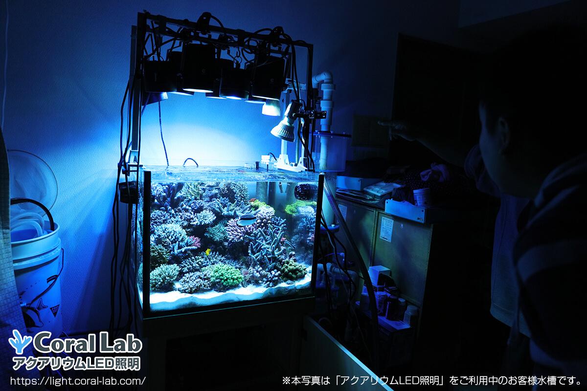 佐久間様のアクアリウムLED照明を利用したオーバーフロー水槽の全景