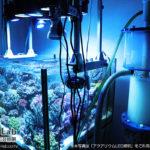 アクアリウムLED照明を利用している水槽のタンクデータ